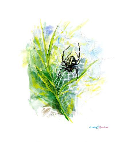 Pavouček v trávě