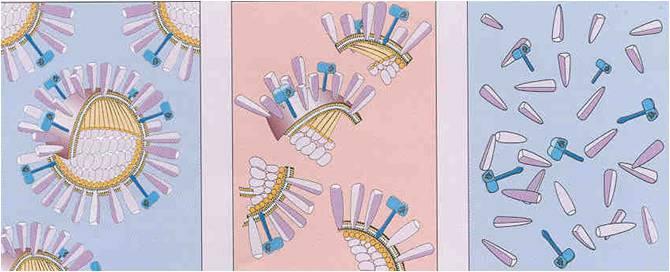 povrchový antigen