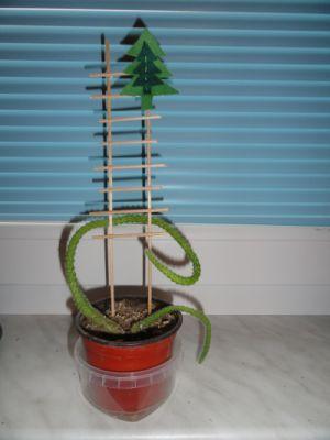 Stromeček