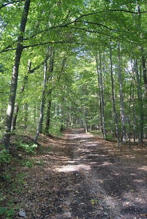 Naučná stezka lesem