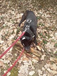 Nedělní procházka se psem