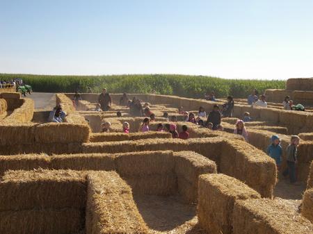 dýňová pole 3